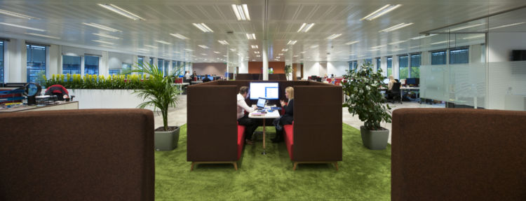 Biophilic office design with green carpet and indoor plants