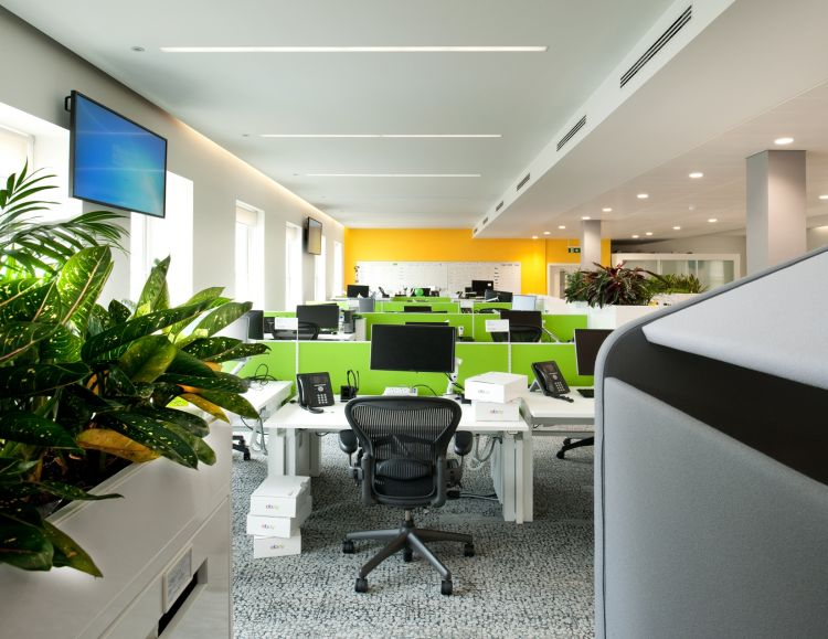 Rows of green workstations and plants in designer office fit out