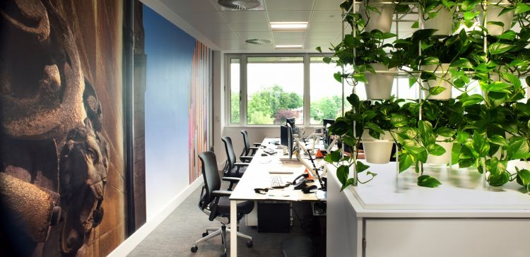 Open plan office with wall images and plants looking out over trees.